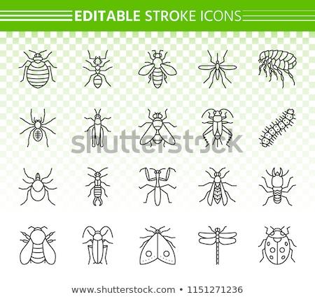 Böcek hat ayarlamak haşarat böcek Stok fotoğraf © Voysla