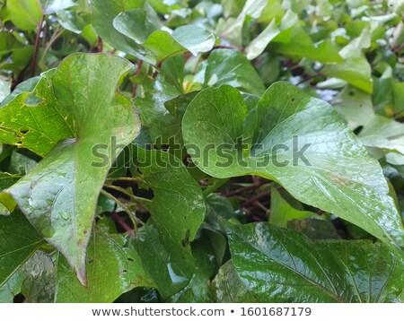 Kaktus puli kwiat szklarnia zestaw odizolowany Zdjęcia stock © robuart
