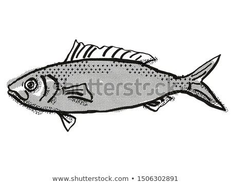 Australian Herring Fish Cartoon Retro Drawing Stock photo © patrimonio