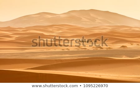 camel caravan in the desert at sunset stock photo © liolle