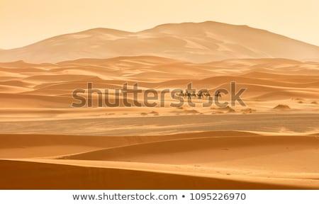Deve karavan çöl gün batımı kumlu gökyüzü Stok fotoğraf © liolle