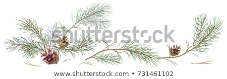 fenyőfa · vízszintes · keret · tél · terv · csoport - stock fotó © lightsource