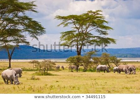 Bianco rhino Bush Sudafrica natura viaggio Foto d'archivio © simoneeman