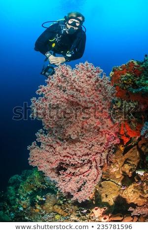 Man snorkelen onderwater zachte koraal tropische vissen Stockfoto © galitskaya