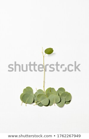 Botanical composition from fallen Eucalyptus leaves on a white background. Stock photo © artjazz