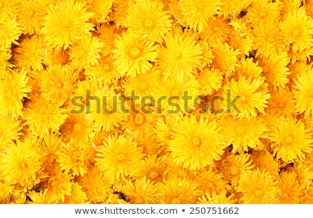 красивой · цветок · капли · воды · лепестков · мелкий - Сток-фото © anna_om