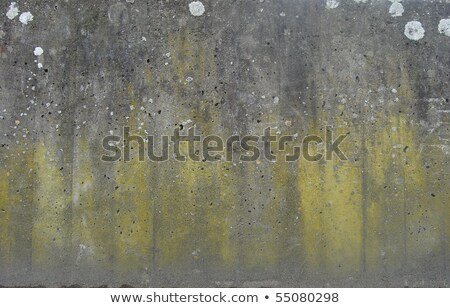 mossy concrete wall with spurs and mould       Stock photo © Melvin07