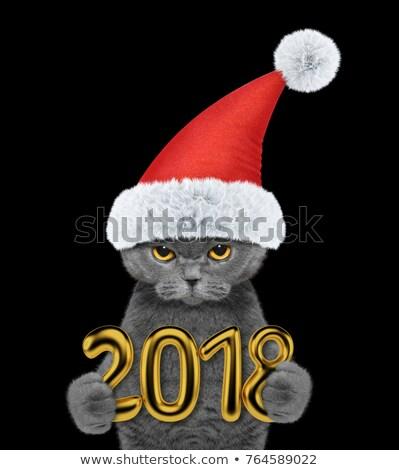 Negro Navidad gatito rojo grande pelota Foto stock © Irinavk