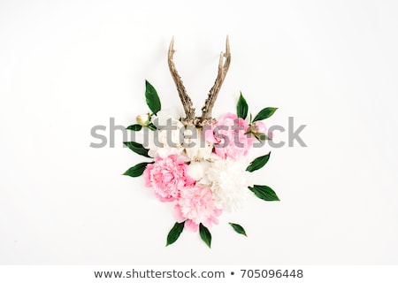 mulher · osso · esqueleto · raio · x · olhando - foto stock © Pixelchaos