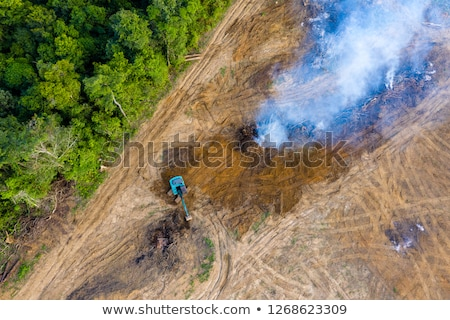 earth mover in tropical rainforest Stock photo © smithore