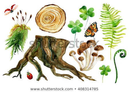 martwych · grzyby · makro · fotografii · martwe · drzewa · tekstury - zdjęcia stock © pzaxe