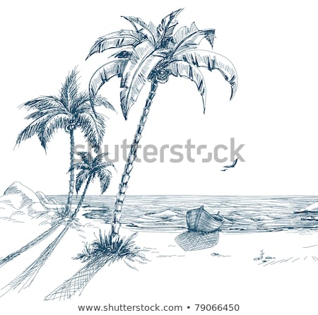 Palm trees and seagull Stock photo © ajlber