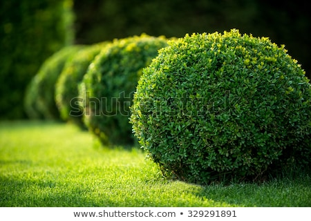 Garden Landscape. Topiary Stock photo © franky242