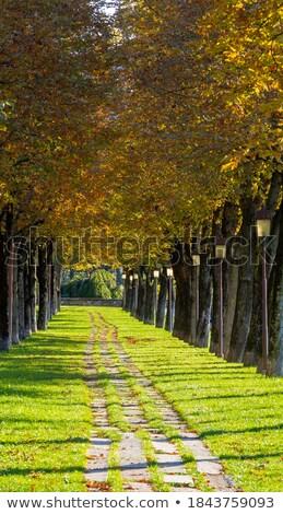 avenue in fall 25 Stock photo © LianeM