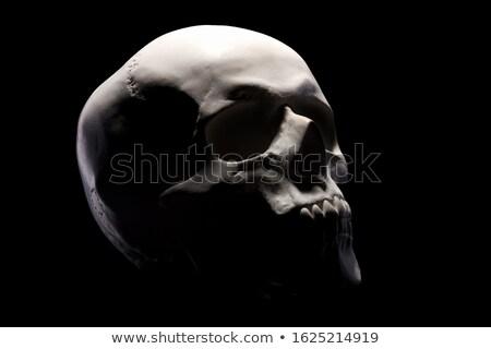 Emberi koponya oldalnézet részletes helyes fehér Stock fotó © Pixelchaos