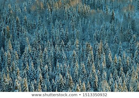 ősz · tűlevelű · erdő · hajnal · napsugarak · ködös - stock fotó © kotenko