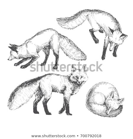 Fox животного эскиз символ татуировка иллюстрация Сток-фото © Hermione
