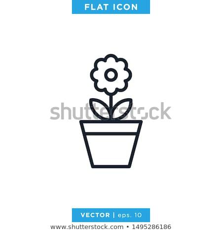 Ikon virágcserép Stock fotó © zzve