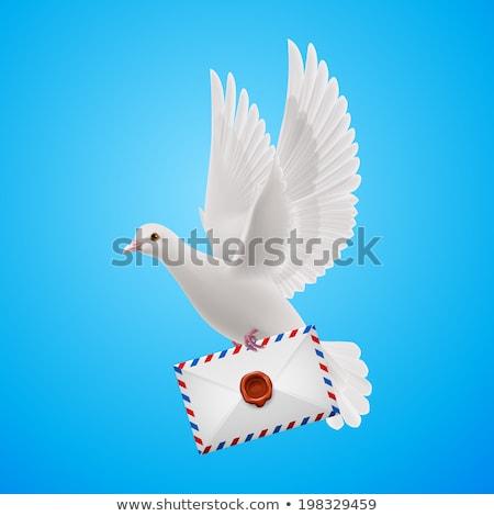 Abstrato pombo carta papel fundo Foto stock © lenapix