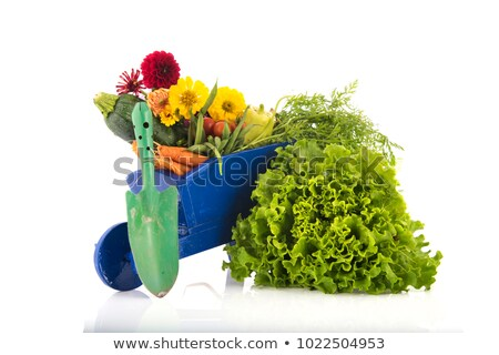 Fresh Carrots in a miniature wheelbarrow  Stock photo © kbuntu