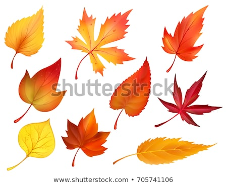 Ash leaves in Autumn Stock photo © danielbarquero