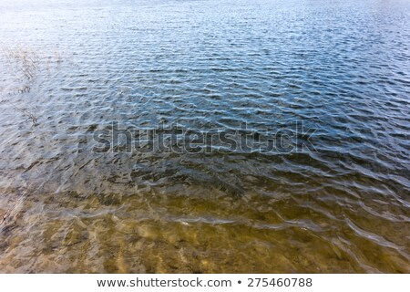 The blue water of the lake and reeds. Stock photo © justinb