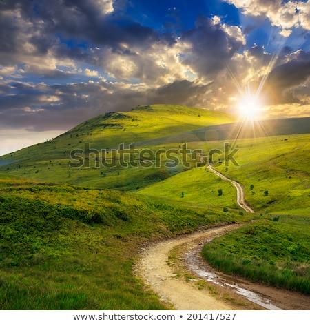 road through the green field stock photo © dotshock