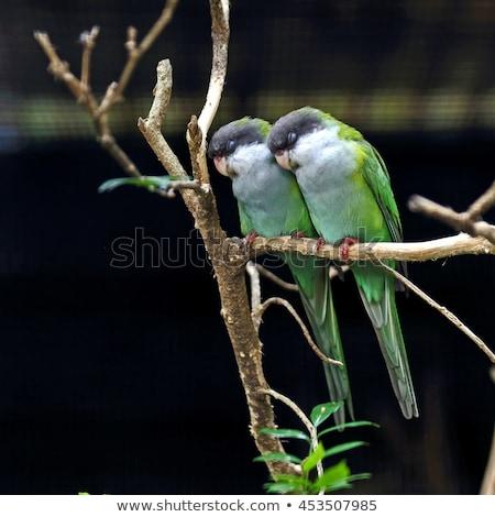 Alszik madár illusztráció aranyos fészek hold Stock fotó © MKucova