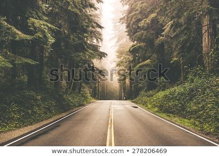 Bos weg berg landschap bomen planten Stockfoto © wime