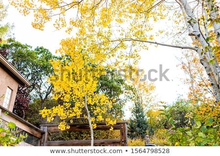 Rocky and tree in garden Stock photo © Yongkiet