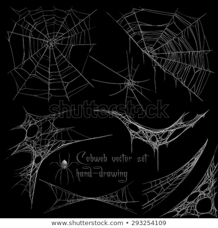trap spider web on dark background stock photo © smeagorl