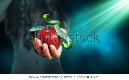 frutas · pecado · ilustración · amor · hombre · manzana - foto stock © adrenalina