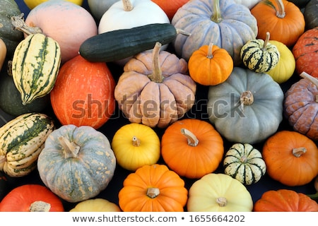 Különböző sütőtök tökök ősz aratás piac Stock fotó © juniart