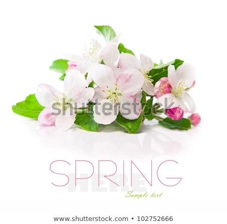 Jabłko kwiaty próba tekst kwiat Zdjęcia stock © tetkoren