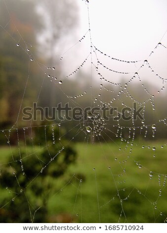 spider web with droplets close-up Stock photo © ultrapro