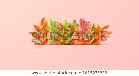 Maple Leaf картона текстуры осень природы лист Сток-фото © maximmmmum