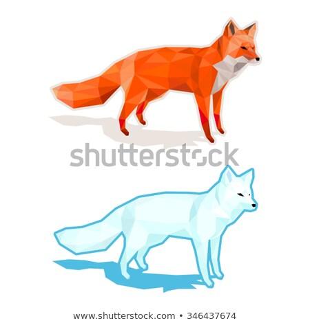 красный Fox низкий стиль зеленый трава Сток-фото © arzawen