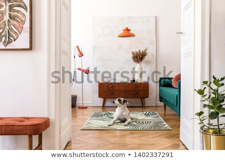 brown dog on the wall stock photo © klinker
