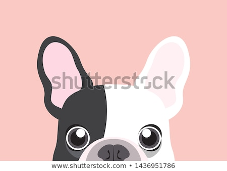 Cute Bulldog Stock photo © 2tun