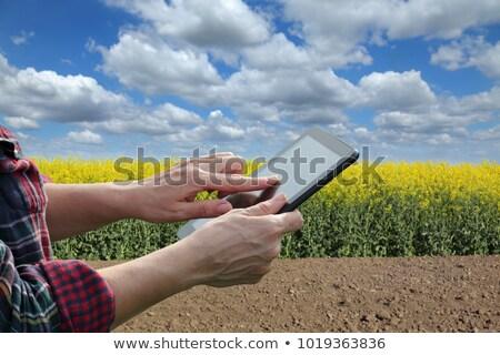 woman examining oilseed rape flower blooming stock photo © stevanovicigor