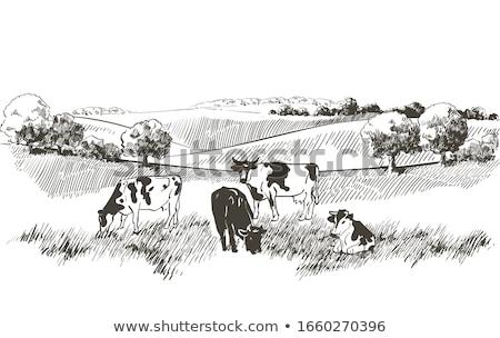 Stock fotó: Tehenek · legelő · kék · ég · nyár · zöld · horizont