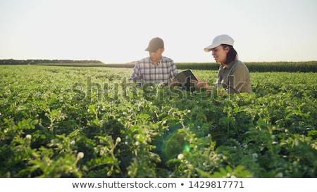 農民 男性 女性 作業 ファーム ストックフォト © vectorikart