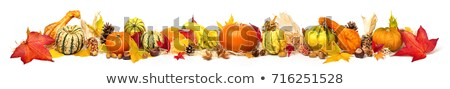 Frame of ornamental pumpkins and gourds Stock photo © ozgur