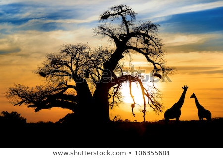 Stock photo: sundown in south africa