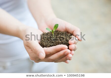 женщину зеленый молодые завода рук Сток-фото © Yatsenko