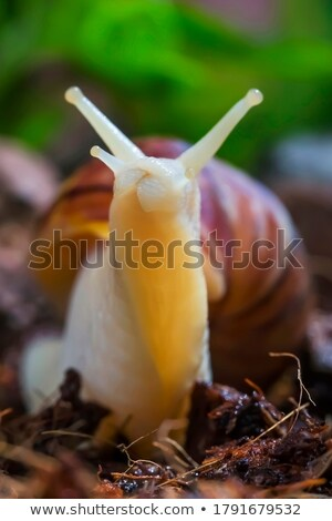 Snail macro Stock photo © raywoo