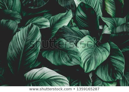 Seamless Leaves Background  Stock photo © UPimages