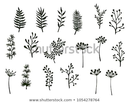 fern leaf silhouette vector illustration stock photo © gladiolus