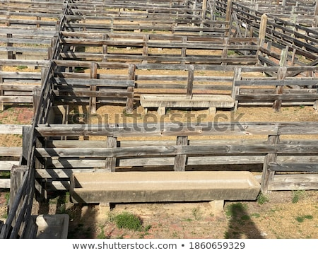 Stock photo: In The Trough