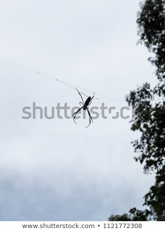 Spider foresta Argentina Foto d'archivio © daboost